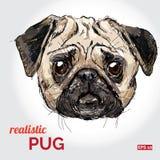 Illustrazione di vettore della testa di cane del carlino Royalty Illustrazione gratis