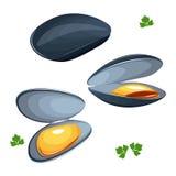 Illustrazione di vettore delle cozze su fondo bianco Fotografia Stock
