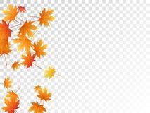 Illustrazione di vettore delle foglie di acero, fogliame di autunno su fondo trasparente royalty illustrazione gratis
