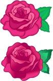 Illustrazione di vettore delle rose Fotografie Stock