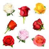 Illustrazione di vettore delle rose illustrazione vettoriale