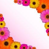 Illustrazione di vettore dello sfondo naturale del fiore della gerbera Fotografie Stock