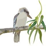 Illustrazione di vettore di kookaburra Fotografie Stock Libere da Diritti