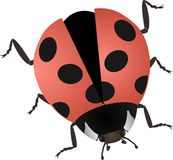Illustrazione di vettore di un ladybug royalty illustrazione gratis