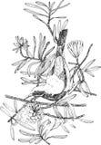 Illustrazione di vettore di un uccello Fotografie Stock