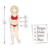 Illustrazione di vettore -- dimensioni dell'abbigliamento delle donne Immagini Stock