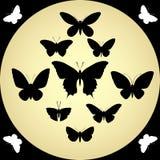 Illustrazione di vettore farfalle Fotografie Stock