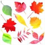 Illustrazione di vettore Fondo della natura dell'autunno V Fotografia Stock