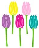 Illustrazione di vettore messa fiori variopinti dei tulipani Immagini Stock