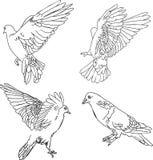 Illustrazione di vettore. Quattro colombe Fotografia Stock