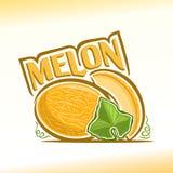 Illustrazione di vettore sul tema del melone Fotografie Stock