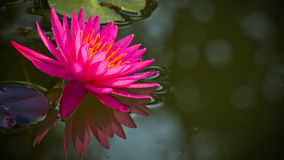Illustrazione di zen del fiore di loto Fotografie Stock