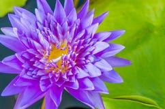 Illustrazione di zen del fiore di loto Immagini Stock