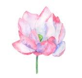 Illustrazione di zen del fiore di loto Immagine Stock Libera da Diritti
