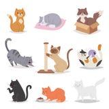 Illustrazione differente delle razze del fumetto dei caratteri divertenti dei gatti Animale domestico dei giovani di Kitty Fotografia Stock