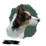 Illustrazione digitale miniatura di arte del cane di caccia e di funzionamento del fox terrier Ritratto canino, primo piano di pr royalty illustrazione gratis