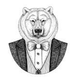 Illustrazione disegnata a mano animale dei pantaloni a vita bassa dell'orso polare per il tatuaggio, emblema, distintivo, logo, t Fotografia Stock