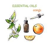 Illustrazione disegnata a mano con olio essenziale dell'arancia Immagini Stock Libere da Diritti