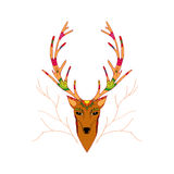 Illustrazione disegnata a mano dei cervi di Natale Immagine Stock