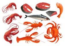 Illustrazione disegnata a mano dei frutti di mare e della birra Fotografia Stock