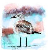 Illustrazione disegnata a mano del bello gabbiano dell'acquerello illustrazione vettoriale