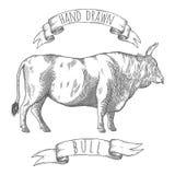 Illustrazione disegnata a mano del toro Immagine Stock