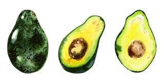 Illustrazione disegnata a mano dell'acquerello dell'avocado sui precedenti bianchi Utile per gli inviti, scrapbooking Fotografie Stock Libere da Diritti