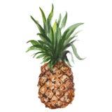 Illustrazione disegnata a mano dell'acquerello dell'ananas Progettazione e del quadro televisivo royalty illustrazione gratis