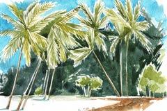 Illustrazione disegnata a mano dell'acquerello delle palme Linea costiera del Palm Beach Immagine Stock Libera da Diritti