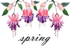Illustrazione disegnata a mano dell'acquerello fucsia Bei fiori e germogli rosa isolati su un fondo bianco Immagine Stock