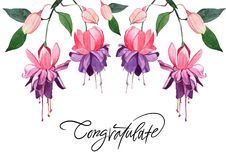 Illustrazione disegnata a mano dell'acquerello fucsia Bello flowe rosa Fotografie Stock Libere da Diritti
