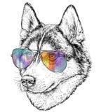 Illustrazione disegnata a mano di modo di Husky Hipster con gli occhiali da sole dell'aviatore illustrazione vettoriale