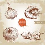 Illustrazione disegnata a mano di stile di schizzo delle spezie Aglio, radice dello zenzero, cipolla e peperoncini roventi affett Fotografia Stock