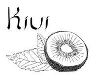 Illustrazione disegnata a mano di trattamento sana di Kivi Vegetarian di vettore Uso per la barra, cocktail, aletta di filatoio,  fotografia stock libera da diritti