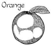 Illustrazione disegnata a mano di trattamento sana vegetariana arancio di vettore Uso per la barra, cocktail, aletta di filatoio, fotografia stock