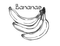 Illustrazione disegnata a mano di trattamento sana vegetariana delle banane di vettore Uso per la barra, cocktail, aletta di fila fotografia stock