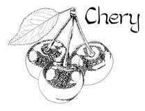 Illustrazione disegnata a mano di trattamento sana vegetariana di Chery di vettore Uso per la barra, cocktail, aletta di filatoio fotografia stock