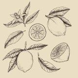 Illustrazione disegnata a mano di vettore - collezioni di limoni illustrazione di stock