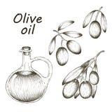 Illustrazione disegnata a mano di vettore con le olive e l'olio d'oliva abbozzo Immagini Stock