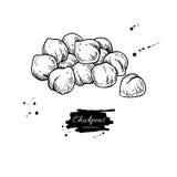 Illustrazione disegnata a mano di vettore dei ceci Oggetto isolato di stile inciso verdura royalty illustrazione gratis