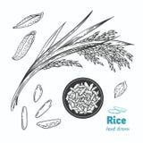 Illustrazione disegnata a mano di vettore del riso illustrazione di stock