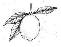 Illustrazione disegnata a mano di vettore - limone illustrazione vettoriale