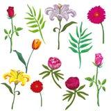 Illustrazione disegnata a mano di vettore stabilito del fiore illustrazione vettoriale