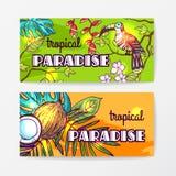 Illustrazione disegnata a mano di vettore tropicale Fotografia Stock