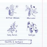 Illustrazione disegnata a mano - insieme della natura e di salute Immagini Stock Libere da Diritti