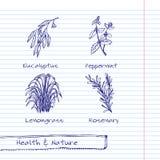 Illustrazione disegnata a mano - insieme della natura e di salute Fotografia Stock Libera da Diritti