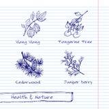 Illustrazione disegnata a mano - insieme della natura e di salute Fotografia Stock