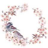 Illustrazione fatta a mano dell'acquerello del passero Fotografia Stock