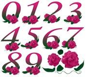 Illustrazione floreale rosa di numeri Fotografia Stock