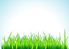 Illustrazione fresca dell'erba verde Fotografia Stock